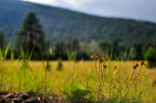 Dandelion Hills